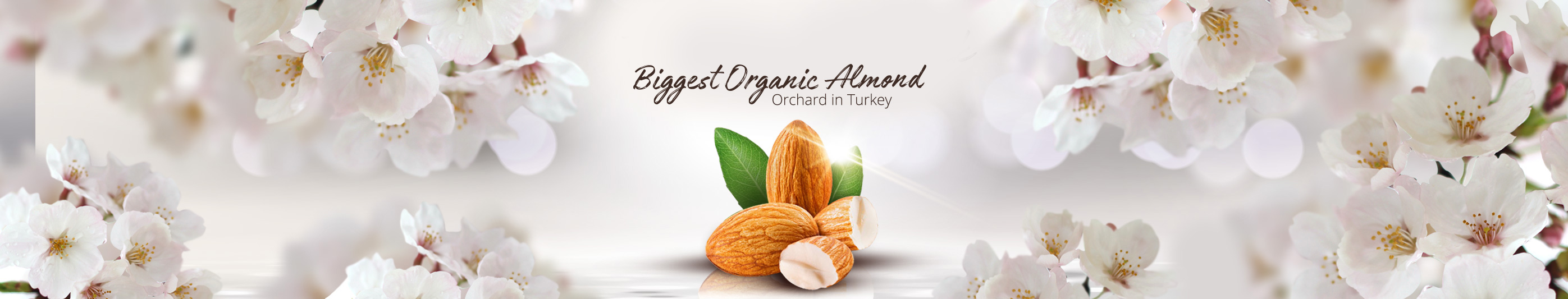 The Biggest Organic Almond Orchard In Turkey